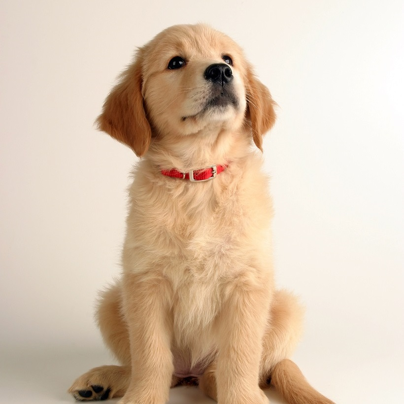 Blog animaux : comment prendre soin de son chien ?
